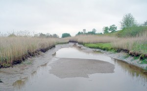 Ballard Street Salt Marsh Restoration
